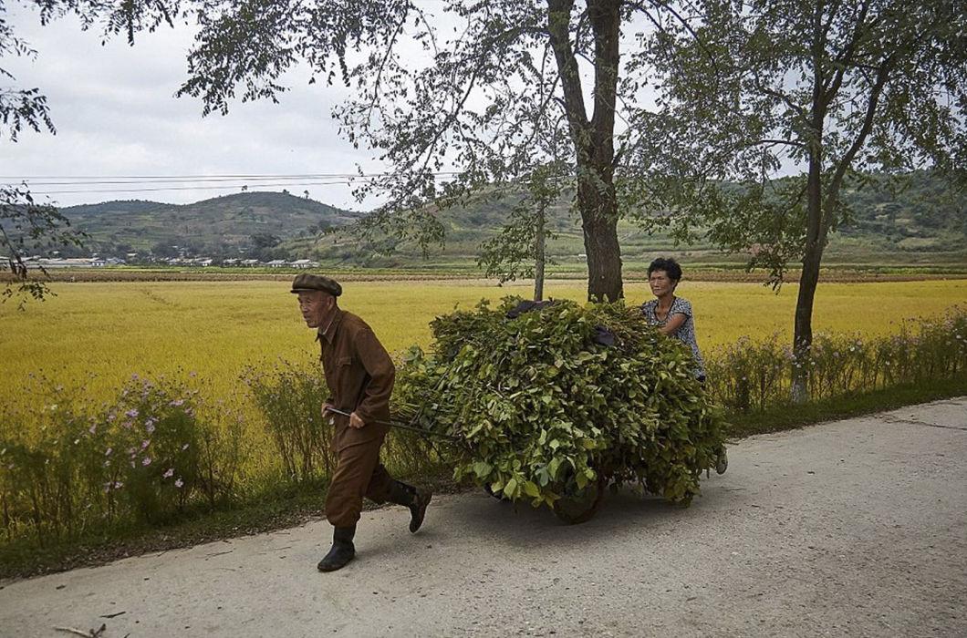богатые северной кореи фото красиво выглядят