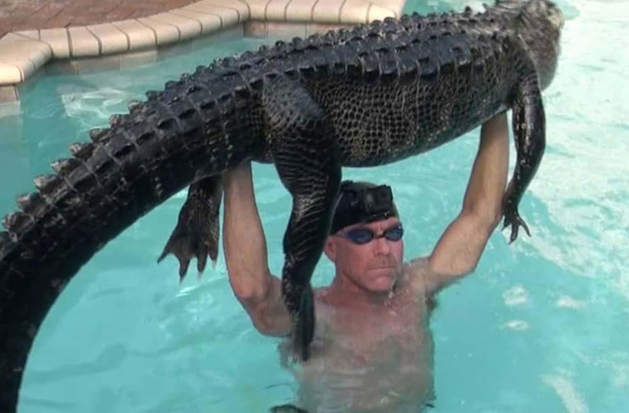 Мужчина победил 2,5 метрового аллигатора в бассейне
