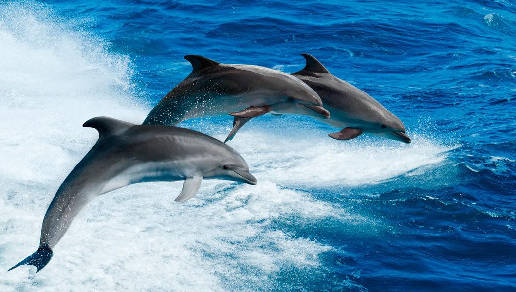 Картинка дельфины стаи