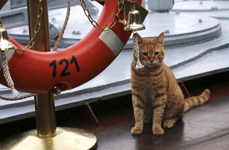 Животные на кораблях - трудяги, спасатели и отдушина