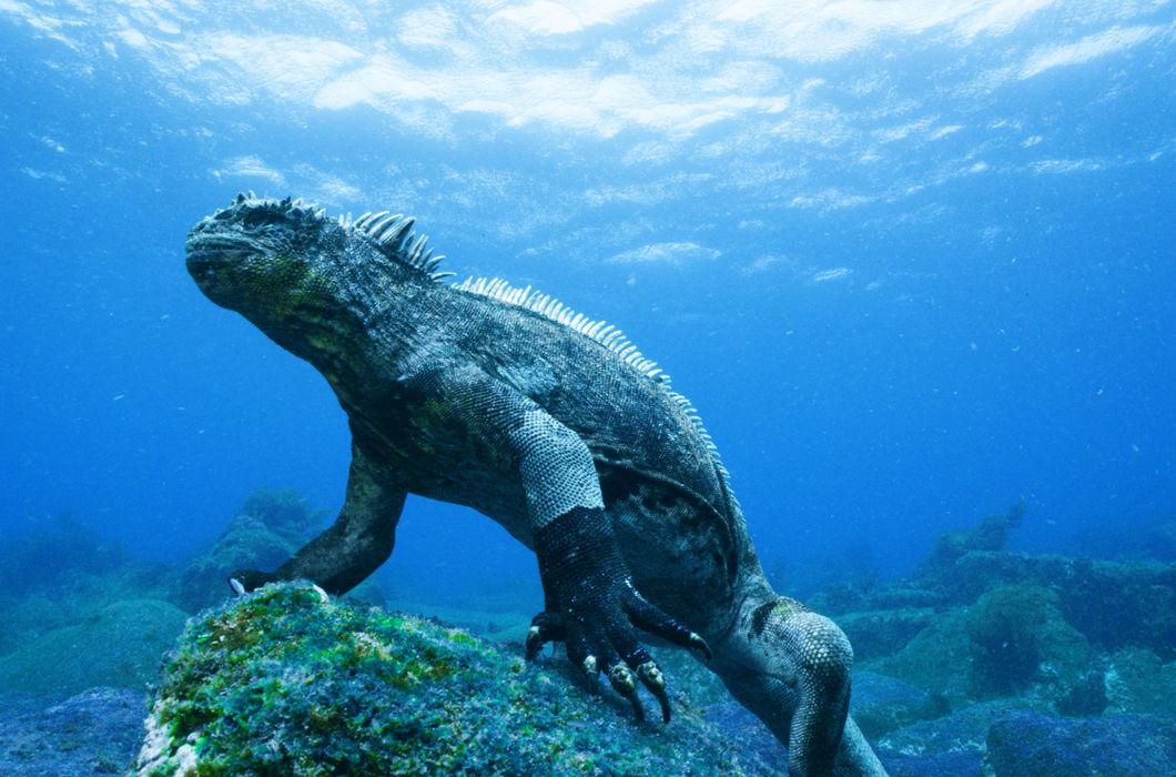 Картинки животных в тихом океане