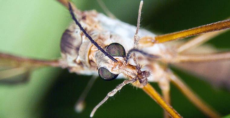 комар переносит опасные болезни