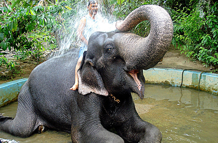 Слон купается картинка