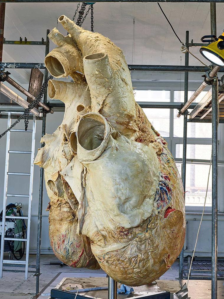 Сердце кита картинка