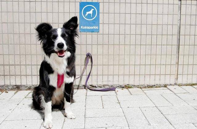 парковка для собак финляндия