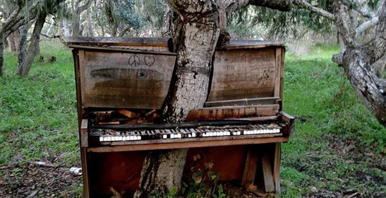 Дерево-пианино, Форт Орд, Монтерей, штат Калифорния, США