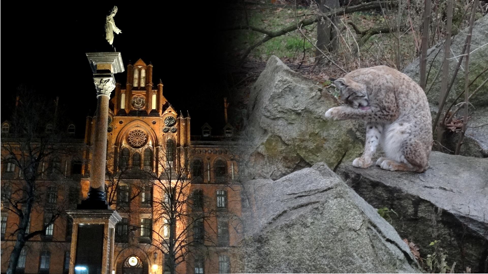Вроцлав. Один из старейших зоопарков Европы 1 января