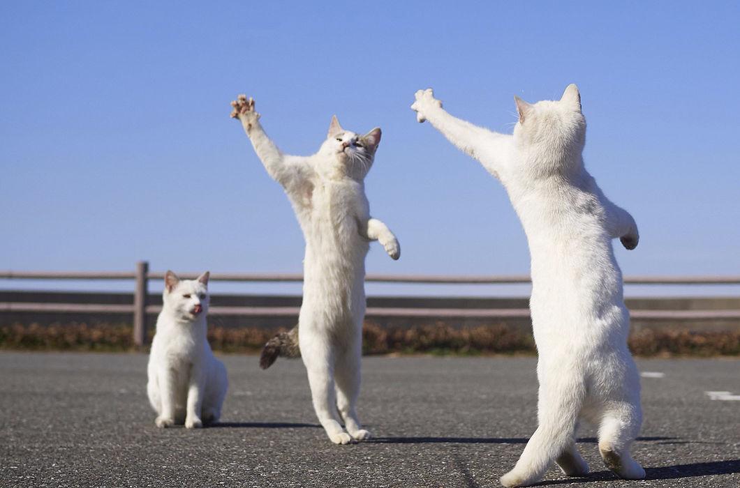 Картинки две кошечки танцуют