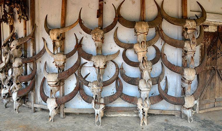 охотники за головами, самостоятельные путешествия, приключения, бекпекер, бэкпекер, Химушин, Бирма, Индия, Нагаленд, племена, коньяк