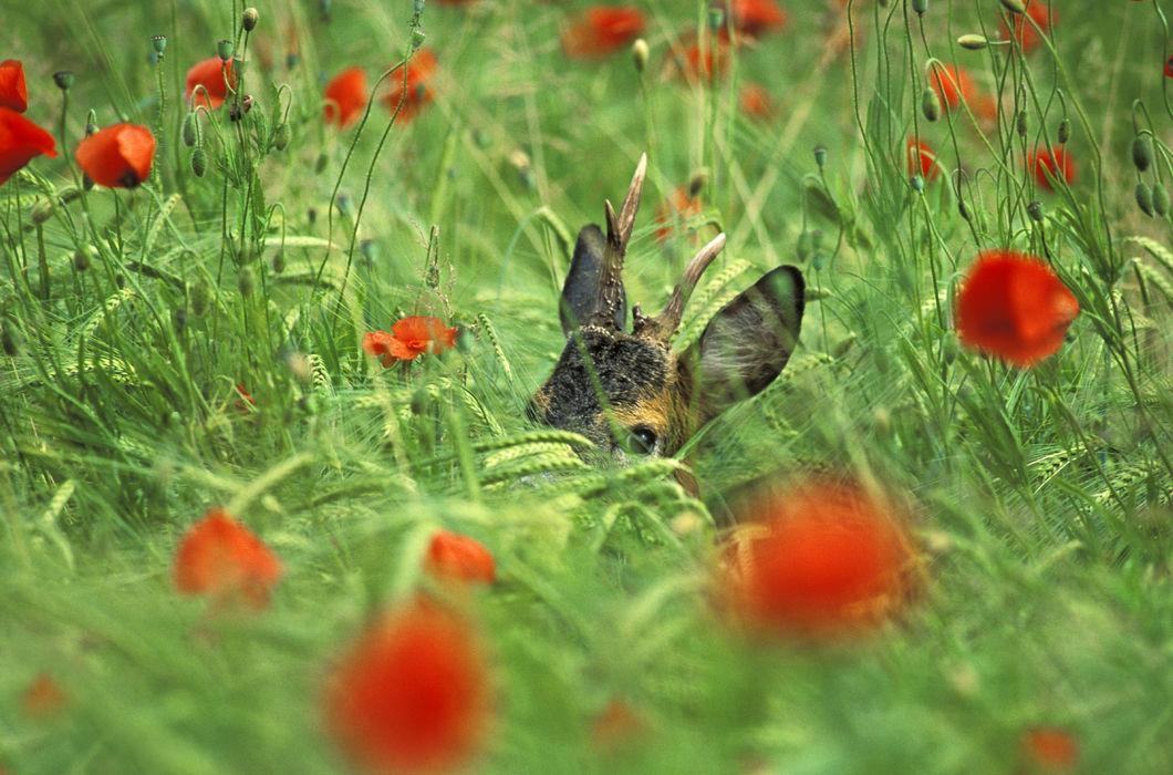 каждой картинки животные прячутся понравятся
