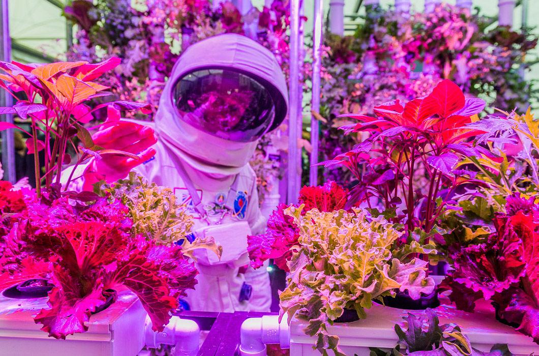 цветы будущего картинки вашему вниманию