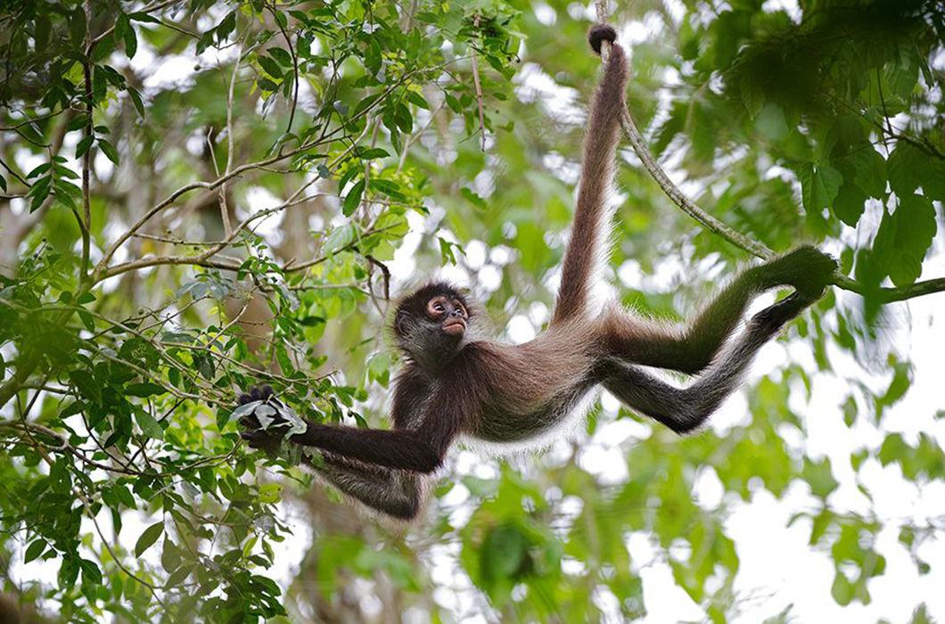 Картинки с веселыми обезьянами деликатесные