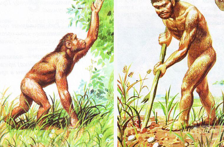 Занятия первобытных людей: сбор плодов, ягод, кореньев и яиц