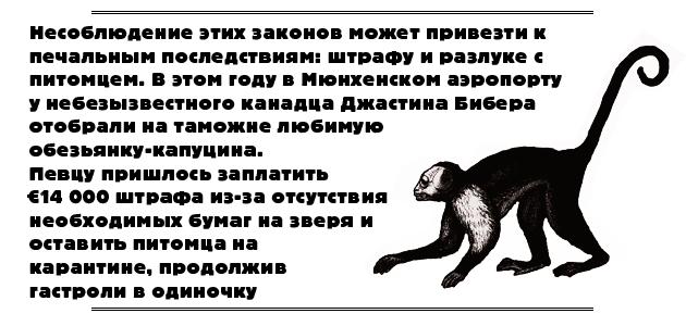 юридическое, мы везем с собой кота, путешествие с животными, поездки с собаками, животные в самолете, ввоз животных, вывоз животных, путешествие с домашними животными, законы разных стран