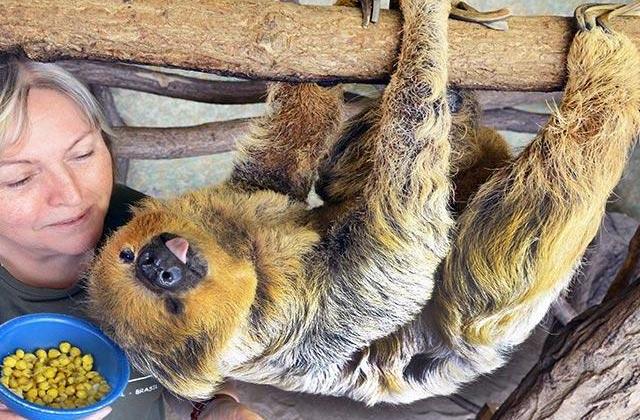 Немецкий ленивец признан старейшим в мире