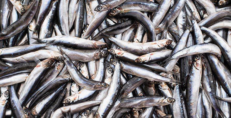 Необычные осадки: дождь из рыбы