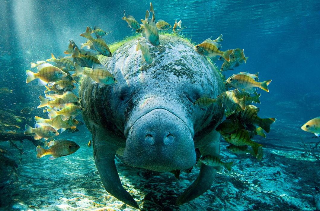 обитатели тихого океана только картинки