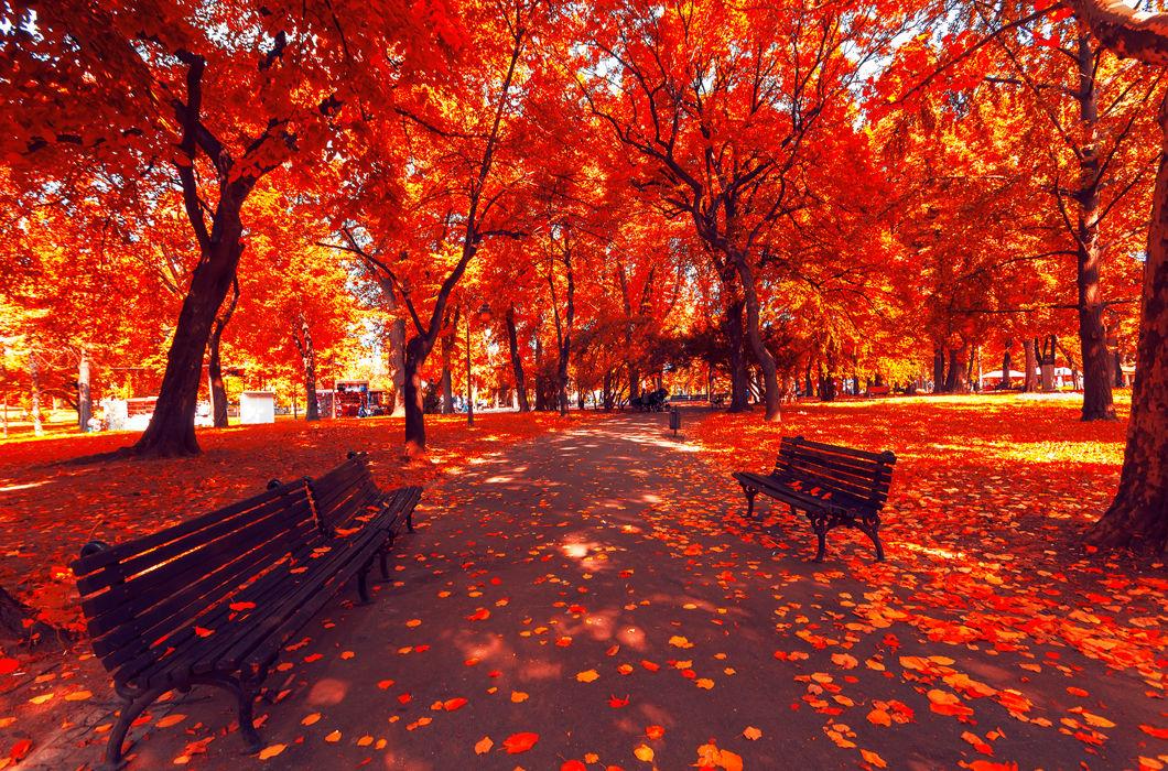 Осень: лучшие фотографии со всего мира - Телеканал «Моя ...