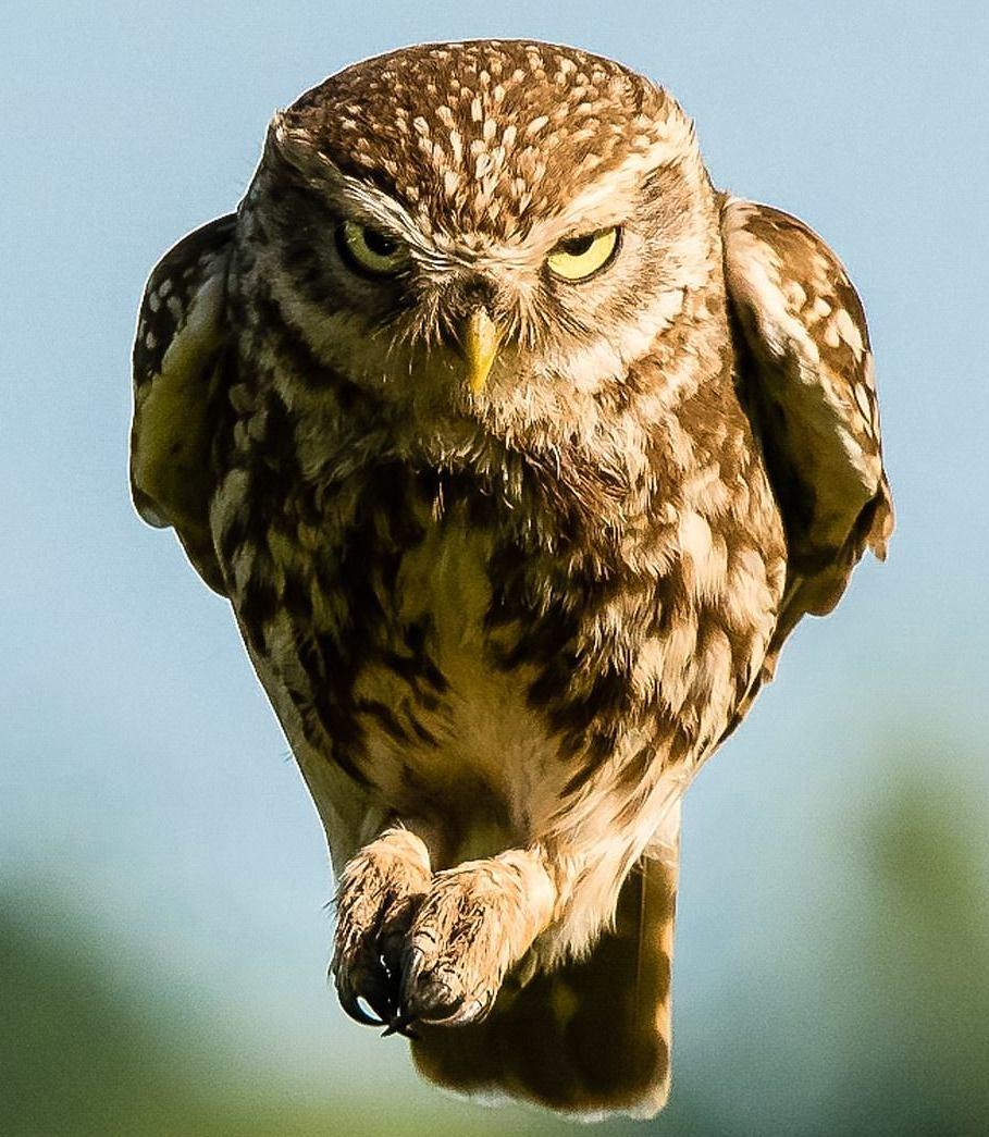 надрез картинка сердитая сова тех, кто пропустил